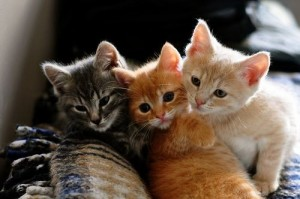 Anziano u****e tre gattini con un badile