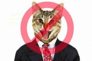 Facebook, attento a condividere gattini: potrebbero chiuderti il profilo...