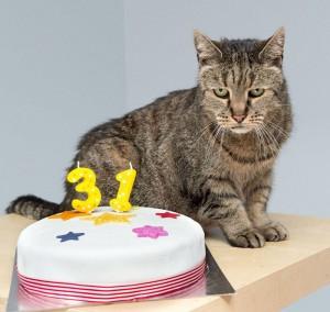 Nutmeg ha 31 anni è il gatto più vecchio del mondo