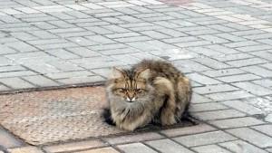 """Roma, clochard: """"I gatti di Colle Oppio? Ce li mangiamo tutti"""""""