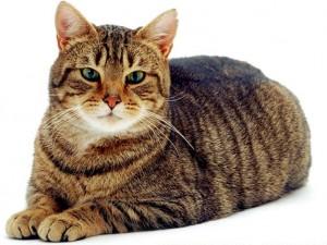 """Cannabis terapeutica per cani e gatti: """"Così il mio micio è rinato"""""""