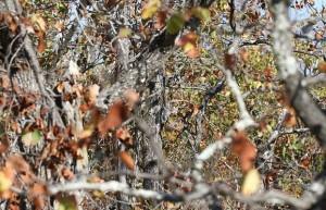 Trova il gufo tra le foglie, la nuova illusione ottica sul web