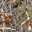 Trova il gufo tra le foglie, la nuova illusione ottica sul web 1