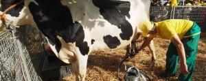 Latte, sì a etichetta salva Made in Italy: obbligo indicazione geografica