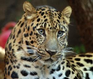 Mammiferi, 300 specie a rischio estinzione. Cacciati come cibo