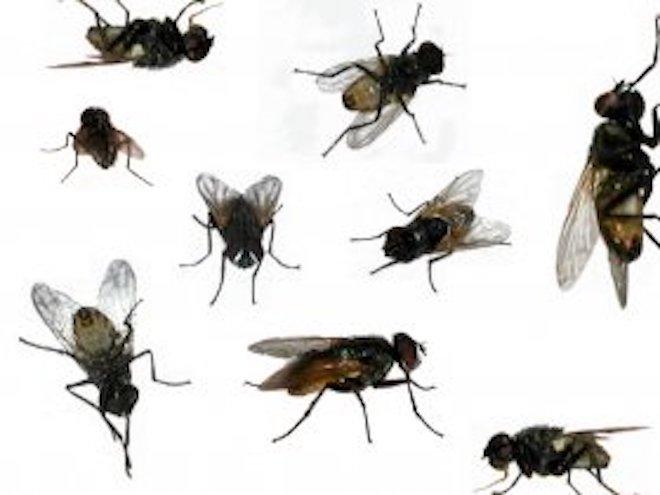 Dopo le cimici del nord est invasione di mosche a genova blitz quotidiano - Invasione di formiche in cucina ...