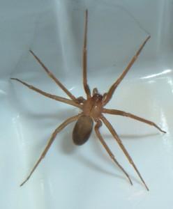 Avezzano, ragno velenoso lo morde: ricoverato nel giorno del compleanno