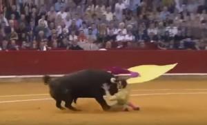 Torero senza un occhio colpito di nuovo sulla faccia da toro da 650 chili