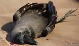 Un uccello morto