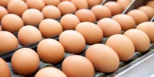 Salmonella, epidemia in Europa: 112 casi. Focolaio originato da uova in Polonia