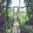 Turista si perde nella giungla in Malesia, sopravvive mangiando erbe 01