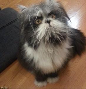 Guarda la versione ingrandita di Cane o gatto? Virale su Twitter la FOTO dell'animale misterioso