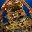 Cimitero sottomarino degli aerei della seconda guerra mondiale 1111