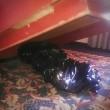 FOTO cadavere sotto al letto clienti hotel ci dormivano senza saperlo
