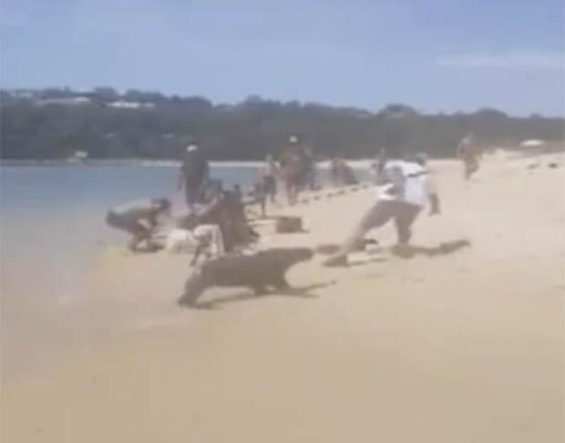 Foca esce dall'acqua e attacca il pescatore