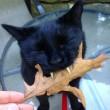 Gatto-vampiro, si chiama Sergio: i suoi canini sono lunghissimi13