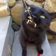 Gatto-vampiro, si chiama Sergio: i suoi canini sono lunghissimi12