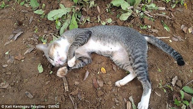 Gatto veglia tomba padrona di giorno e notte da un anno 3