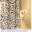 Otitis, gatto senza orecchie e sordo guarisce la sua padrona dall'ansia2