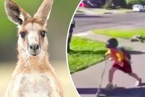 Poliziotto spara e uccide canguro per strada davanti ai bambini
