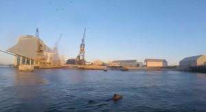 YOUTUBE Mucca destinata al macello fugge in mare a nuoto