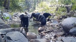 Scimpanzè usano rete da pesca per mangiare alghe7