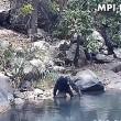 Scimpanzè usano rete da pesca per mangiare alghe5