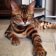 I gatti che su Instragram hanno più follower degli umani15