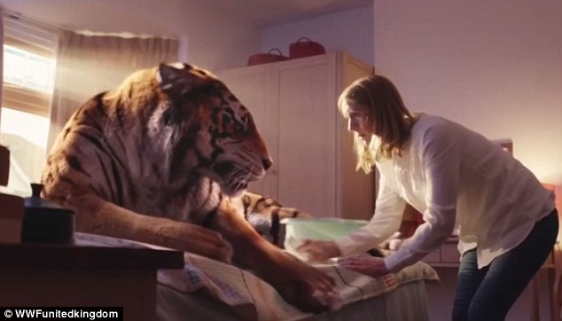 Tigre ferita sul letto di casa spot commovente Wwf  (16)