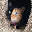 I gatti che su Instragram hanno più follower degli umani14