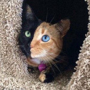 I gatti che su Instragram hanno più follower degli umani111
