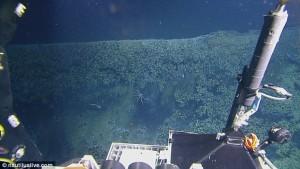 YOUTUBE Nel Golfo del Messico la piscina naturale in cui i pesci muoiono
