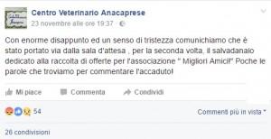 Anacapri, rubano salvadanaio al Centro Veterinario: offerte sparite per la seconda volta