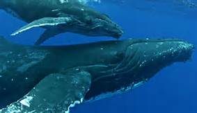 Balene