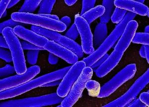 """Batteri nello spazio hanno """"fame"""": per sopravvivere usano un kit genetico di emergenza"""