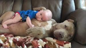 YOUTUBE-FOTO Bulldog americano accudisce e lecca neonato 4