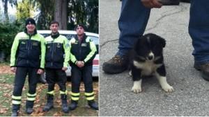 Terremoto, il cucciolo estratto dalle macerie diventerà da soccorso dei vigili del fuoco