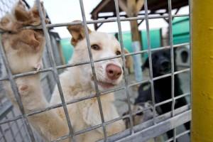Tassa sui cani non sterilizzati: idea Pd contro randagismo ma...