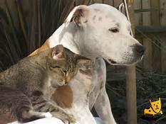 Guarda la versione ingrandita di Cane e gatto