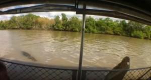 YOUTUBE Coccodrillo attacca barca: panico tra i passeggeri