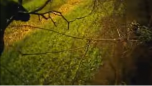 YOUTUBE Falco caccia coniglio: il predatore pensa come l'uomo