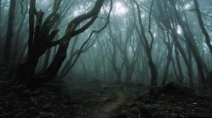 Foresta dei misteri in Transilvania: è Hoia Baciu, la casa del diavolo