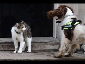 Downing Street, il gatto Larry mette in riga i cani dei ministri