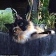 I gatti che su Instragram hanno più follower degli umani 00