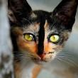 I gatti che su Instragram hanno più follower degli umani 4