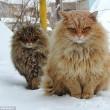 I gatti che su Instragram hanno più follower degli umani 3