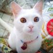 I gatti che su Instragram hanno più follower degli umani 2