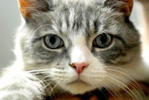 Asl Imperia: esami alla gatta dell'amica, i pazienti in coda al pronto soccorso