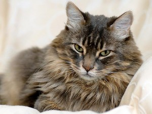 Nerina Carraro e la gattina Margot inseparabili, morte insieme