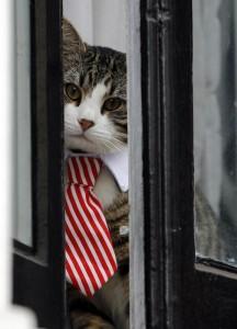 Assange interrogato da pm Svezia in ambasciata: la vera star è il gatto in cravatta 5